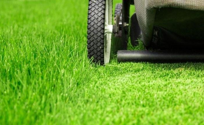 Jak letos udržet trávník ve skvělém stavu?