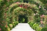 Popínavé růže – královny zahrad