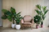 Vpusťte si zeleň do bytu – bydlete ve stylu urban jungle